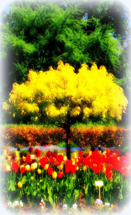 lusterko z widokiem na ogród