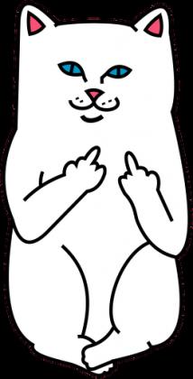 Bokserka  Ripndip cat