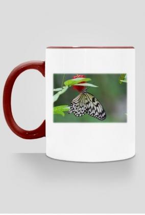 Kubek Motyl #3