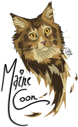 Maine Coon kubek