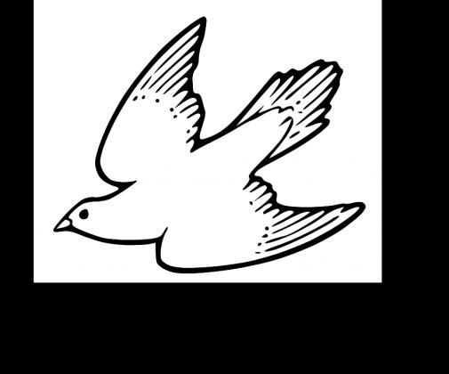 """PORTFEL #1 """"Hodowca gołębi pocztowych"""""""