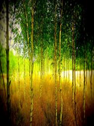 Wśród drzewek