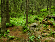 W lesie zielonym