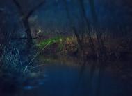 Niebieski las