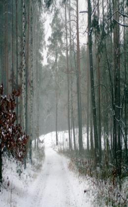 Leśny krajobraz