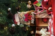Pudełko śniadaniowe święta, kot, grumpy cat