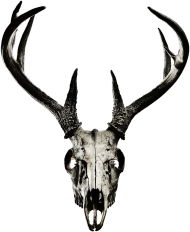 T-shirt - deer skull vol. 4