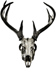 Sleeveless - deer skull vol. 2