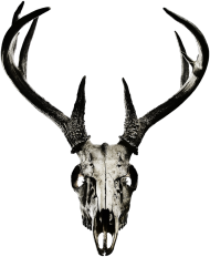 Sleeveless - deer skull vol. 4