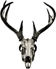 Bottle opener - deer skull