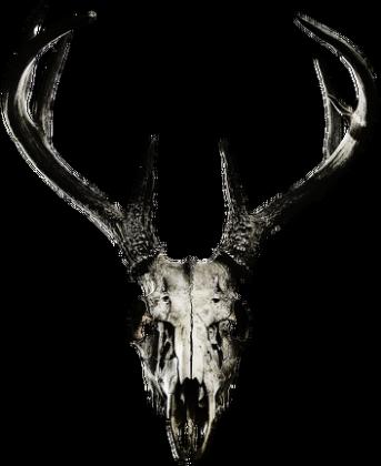 Slim T-shirt - deer skull vol. 2