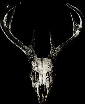 Hoodie #1 - deer skull vol. 4