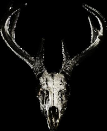 Hoodie #2 - deer skull vol. 2