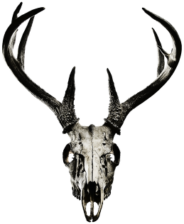 Big bag - deer skull