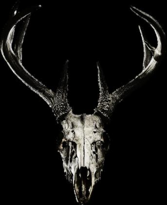 Poster - deer skull vol. 2
