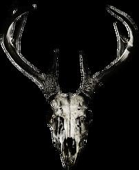 Vanity-case - deer skull