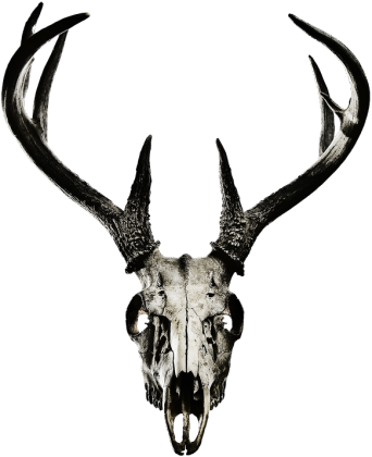 Wallet - deer skull