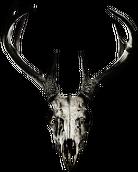 V-string - deer skull vol. 2 (front logo)