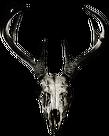 V-string - deer skull vol. 2 (back logo)