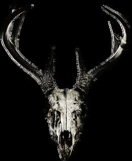 Hoodie #3 - deer skull vol. 2