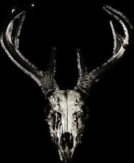 Hoodie - deer skull vol. 2