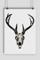 Poster - deer skull #1