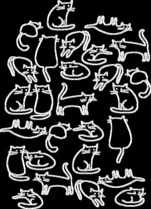 Koty mix białe