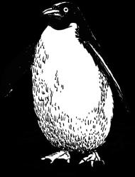 ptak 8