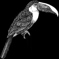 ptak 10