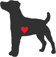 Męska koszulka - Russell Terrier - ciemny