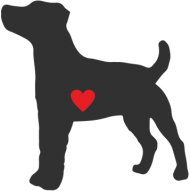Kubek - Russell Terrier