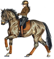 Koń ujeżdżeniowy