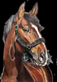 Gniady koń portret