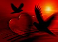 Puzzle - Serce gołąbki