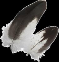 Pióra bielika - poszewka