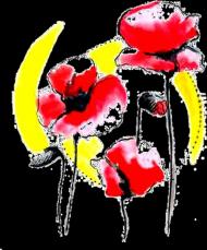 Bokserka Poppies White