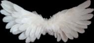 Skrzydła białe