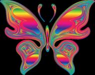 Motyl tęczowy