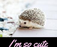 Koszulka Jeżyk I'm So Cute