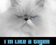 Koszulka I'm Like A Tiger