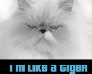 Bluza I'm Like A Tiger