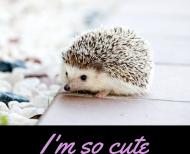 Bluza Jeżyk I'm So Cute