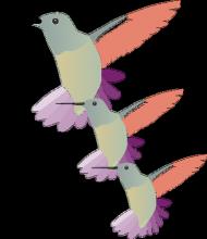 Koliber body