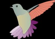 Koliber t-shirt męski