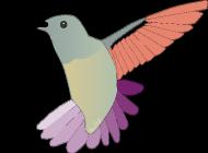 Koliber t-shirt dziewczęcy