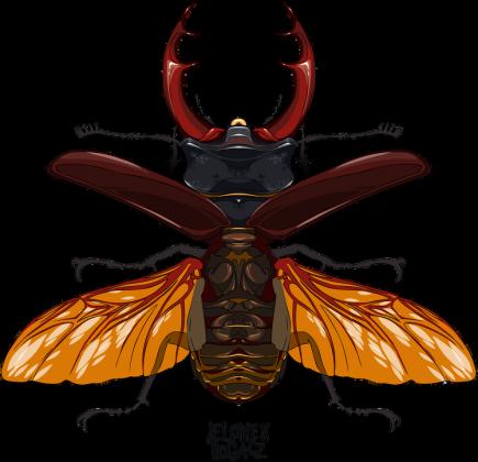 poduszka, owady, chrząszcz, jelonek rogacz, entomologia