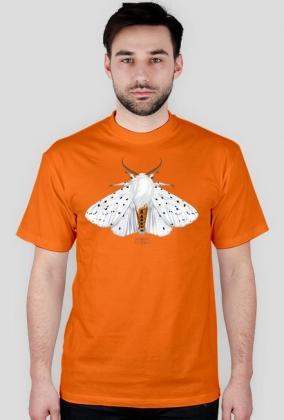 koszulka męska, owady, motyl, szewnica miętówka, , entomologia