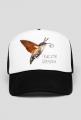 czapka,  owady, motyl, fruczak gołąbek, polski koliber, entomologia