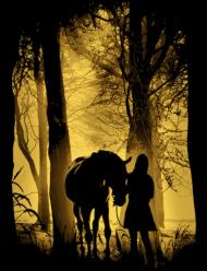 Konie. Koń. Kocham Konie. Prezent dla konia. Jazda konna. Sklep konny. Stajnia. Stajenny. Ile kosztuje koń?