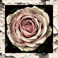 """""""Róża"""""""